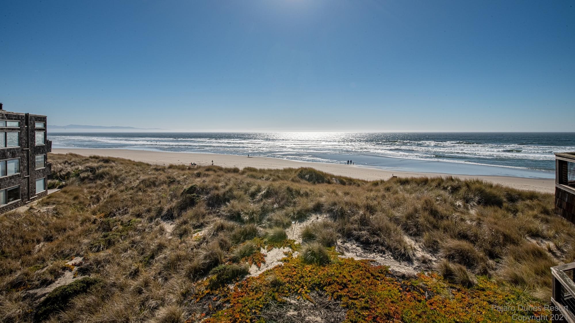 Pajaro Dunes Shorebirds 160 Image 3