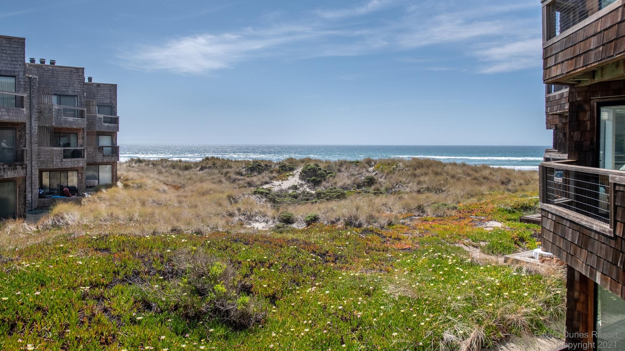 Pajaro Dunes Shorebirds 252 Image 3