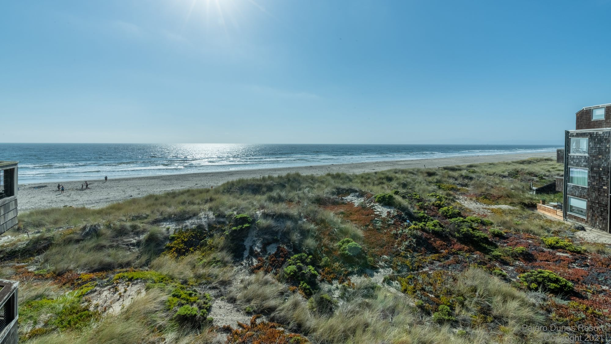 Pajaro Dunes Shorebirds 271 Image 3